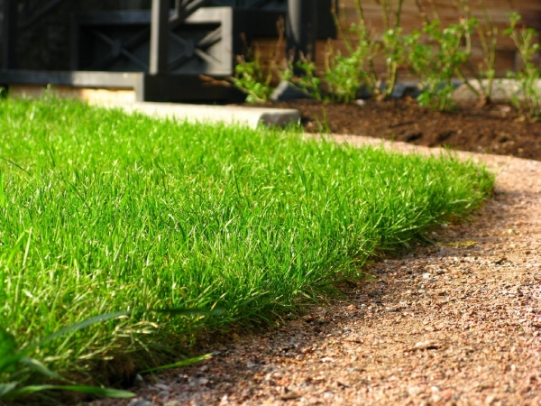 Landscaping Grass Roll : Lawn turf roll out suppliers